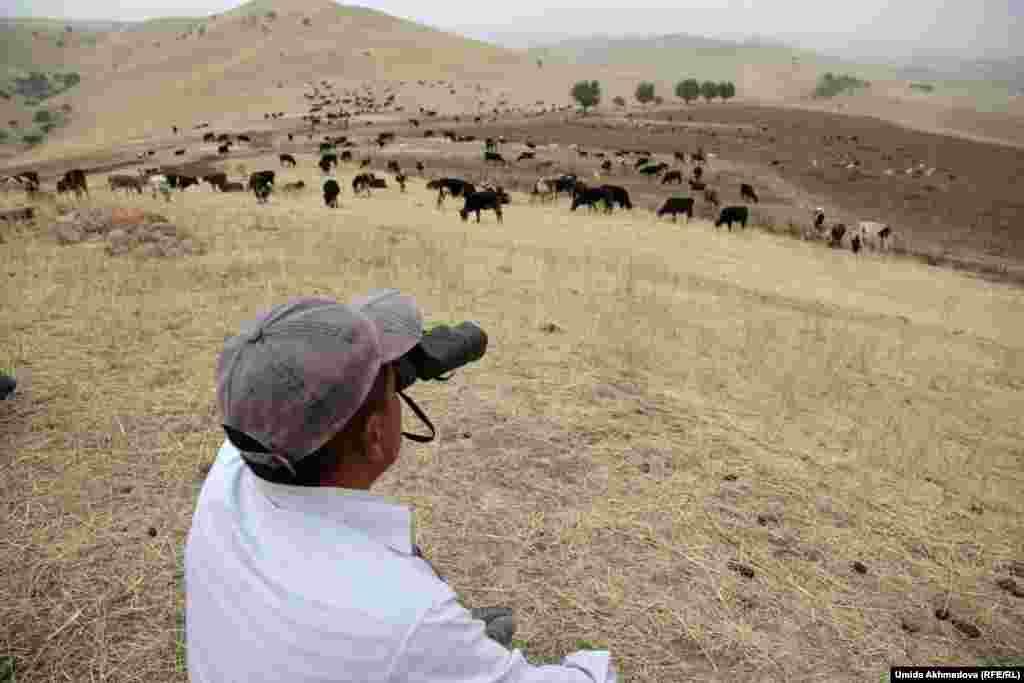 Один из пастухов, Нурбек, наблюдает за выпасом в бинокль.