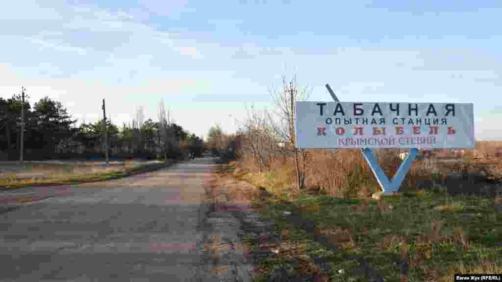 В Табачном действует крымская опытная станция табаководства. Она занимается селекцией и изучением свойств новых сортов, а также разрабатывает способы возделывания культур и сохранения уникальной коллекции из 1235 сортов табака