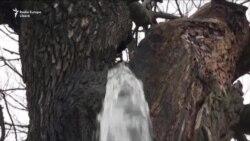 Copacul din care țîșnește apă