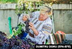 Фестиваль молодого винограда в Молдове. Август 2019 года