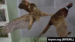 Застывшие мгновения и века: природа в музее Карадагского заповедника (фотогалерея)