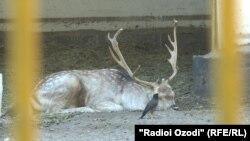 В душанбинском зоопарке. 14 октября 2019 года