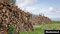 Українські державні установи розкритикували дослідників за звіт про порушення під час заготівлі деревини