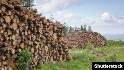 Кримінальну відповідальність за незаконне вивезення лісу в Україні запровадили вперше