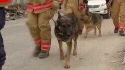 Собаки-спасатели США