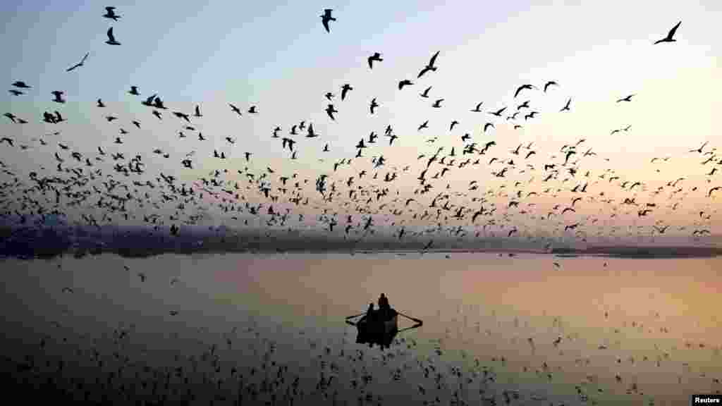 Migratory birds fly above men rowing a boat on the Yamuna River in the old quarters of Delhi, India. (Reuters/Ahmad Masood)