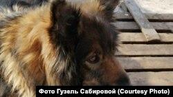 Собака Люська
