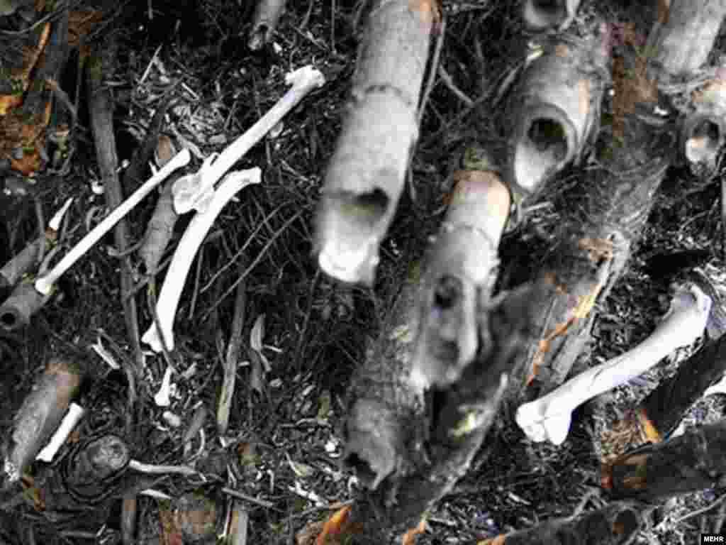 پریشان؛ قتلگاه لاکپشتها و پرندگان سوخته - تخریب محیط پیرامونی تالاب، اعتراضهای وسیعی را در میان کشاورزان منطقه بر انگیخته است.