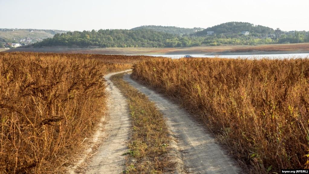 Дорога через прибрежные высохшие кусты горца перечного