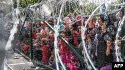 Біженці на угорсько-сербському кордоні, 16 вересня 2015 року