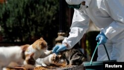 Radnik u zaštitnoj opremi hrani mačke, Istanbul, Turska, 9. april, 2020.