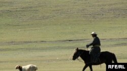 A Mongolian herder chases the one that got away.