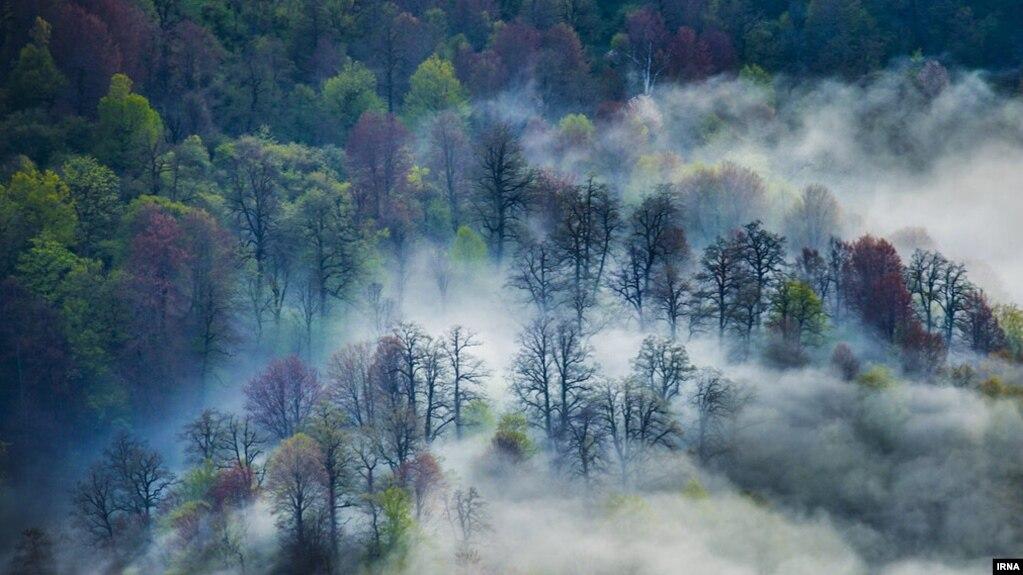 جنگلهای هیرکانی در شمال ایران