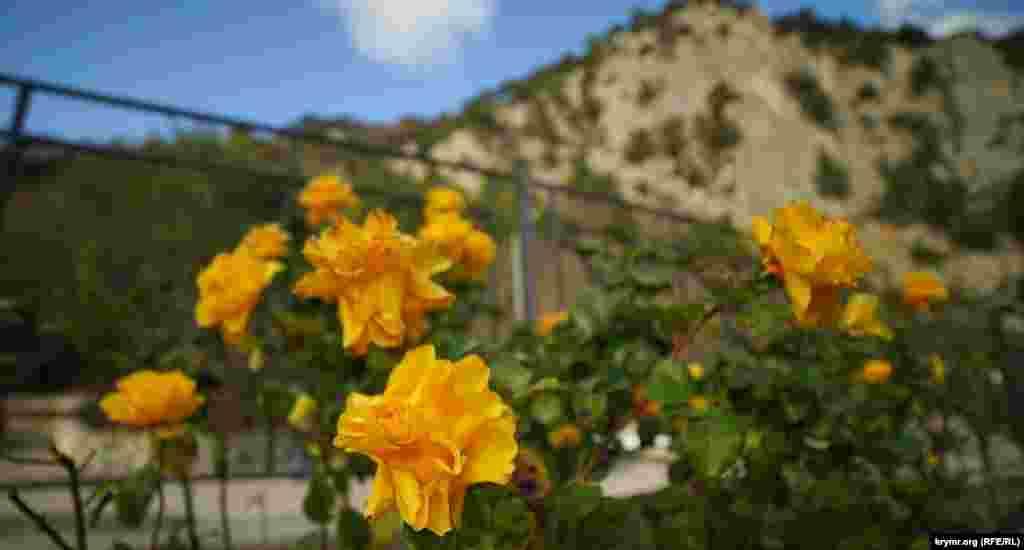 На території храму в січні квітнуть троянди