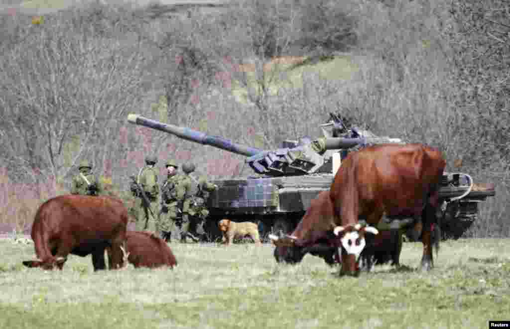Cows graze near a tank and servicemen, believed to be Russian, outside a military base in Perevalnoye, near the Crimean city of Simferopol, in March 2014.
