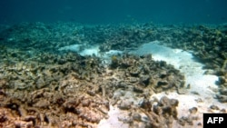 Oštećenja koralnog grebena u Australiji zbog globalnog zagrevanja