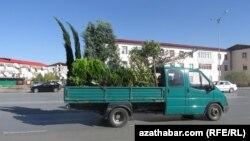 Türkmenistanyň iki pasylda ekilip, bir pasylda guradylýan baglary