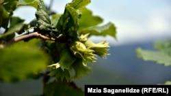 Летом прошлого года население Грузии, особенно ее западной части, на собственном опыте убедилось, какие масштабы может принять нашествие клопов