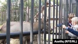 Балалар Казан зообакчасында поши читлеге янында. 2010 ел