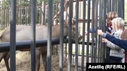 Балалар Казан зообакчасында поши читлеге янында. 2010 елгы фото.