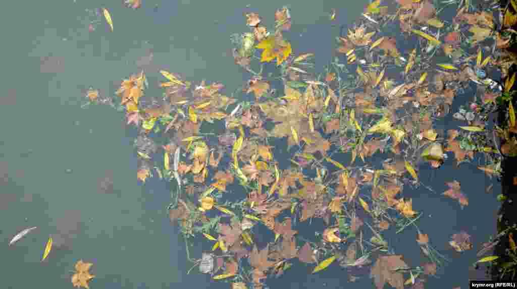 Перше опале листя на дзеркальній поверхні Салгира
