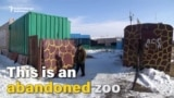 Mangy Menagerie: Animals Left Behind In Abandoned Armenian Zoo