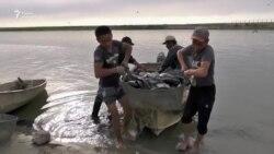 Надежды и потери аральских рыбаков
