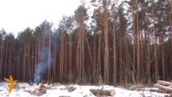 Салігорск: Высечаным лесам будуць паліць у лазьні