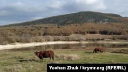 У пруда пасутся коровы