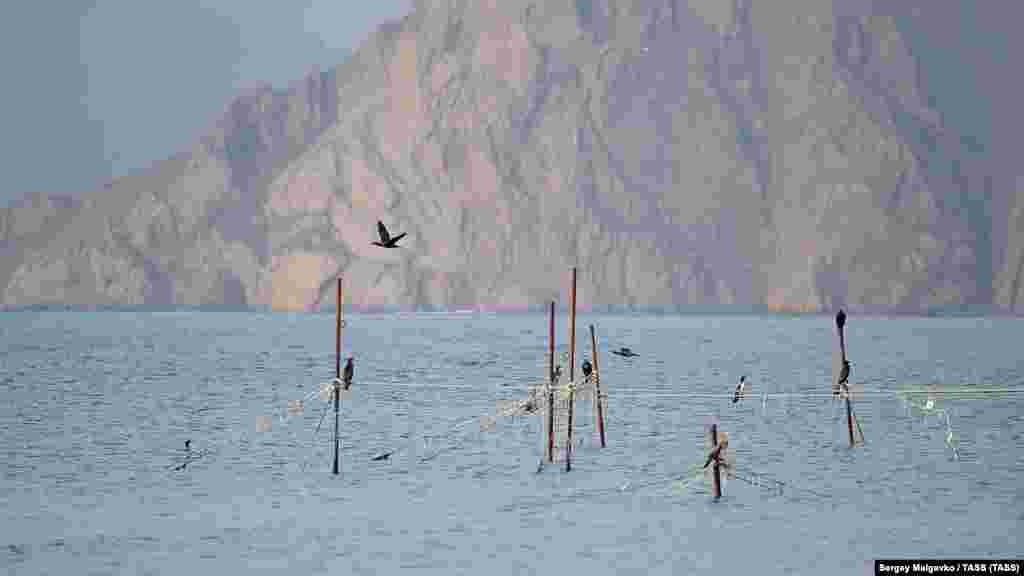 Kaydador qasabasında quşlar balıqçılarnıñ ağlarında otura