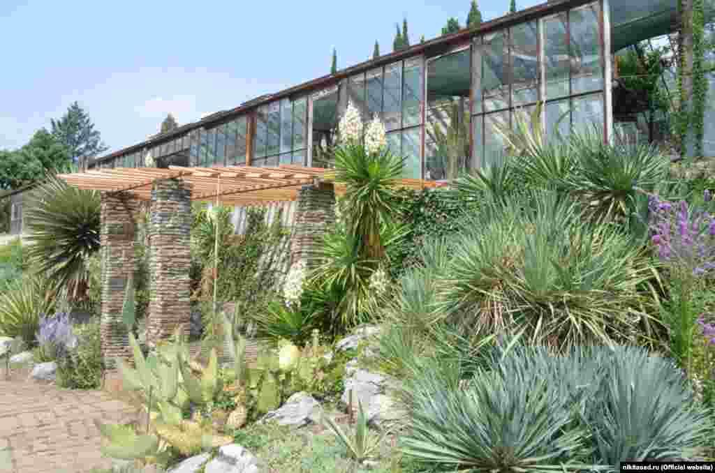 Самые первые кактусы появились в Никите почти 200 лет назад