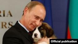 Владимир Путин с подарком от премьер-министра Болгарии Бойко Борисова – щенком каракачанской овчарки