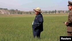 Северокорейский лидер Ким Чен Ын на рисовом поле в одной из воинских частей Северной Кореи. Иллюстративное фото.