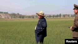 کیم جونگ اون، رهبر کره شمالی در جریان دیدار از یکی از مزارع کشاورزی