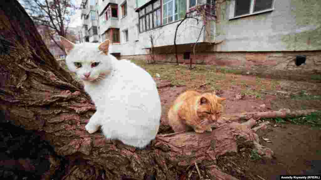 Коты микрорайона имени генерала Корявко