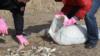 """Местные жители помогают собирать мертвую рыбу на берегу Урала. Фото - с сайта издания """"Акжайык""""."""