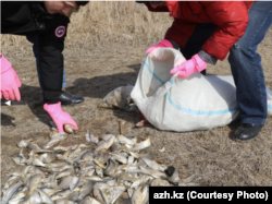 Местные жители участвуют в очистке реки Урал от погибшей рыбы. Фотография с сайта издания «Ак Жайык».