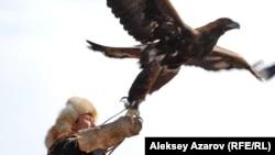 Беркутчи, отпускающий свою птицу. Алматинская область, 23 февраля 2013 года.