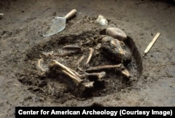These canid remains, unearthed among alluvial deposits at the Koster archaeological site in the Illinois River Valley, are the world's oldest known individual dog burials.