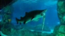 Одна акула съела другую в сеульском аквариуме