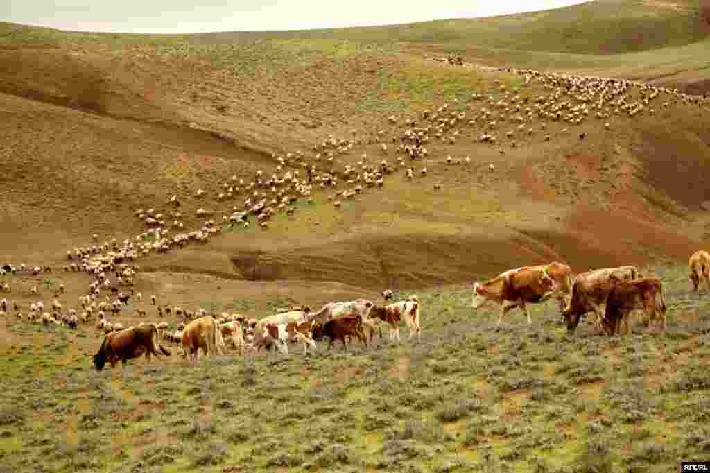 A Spring Passage Through The Caucasus #2