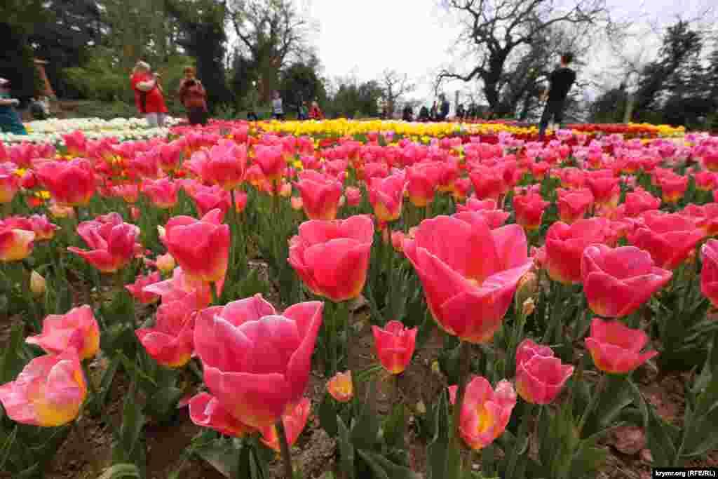 В експозиції, розташованій на трьох терасах розміром з футбольне поле, налічується понад 50 тис. квітів