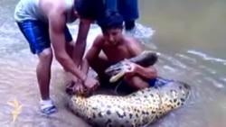 У Перу спіймали п'ятиметрову анаконду