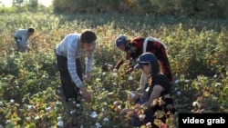 Uzbekistan - young people (possibly children) pick cotton during the harvest. Screen grab. Sept. 20, 2013.