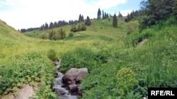 Курорт «Кок-Жайляу» потребует строительства системы оснежения, но водные ресурсы для этого там весьма скудные. Лишь несколько небольших ручейков, стекающих с северных склонов Кумбеля. Вероятно, вода будет переброшена из других ущелий по трубам. Для накопления воды планируется построить крупный резервуар. Гражданские активисты считают, что он может рано или поздно спровоцировать селевой поток, который обрушится и на курорт, и на всё, что расположено ниже него по ущелью. На фото — один из этих ручьев. 9 июля 2017 года.