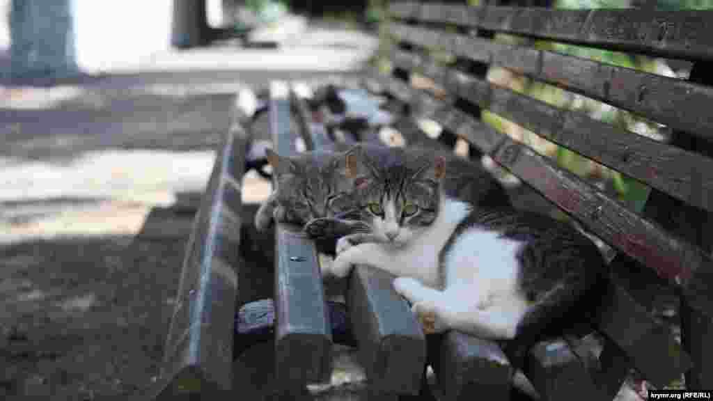 Біостанція славиться своїми котами. Їх там десятки