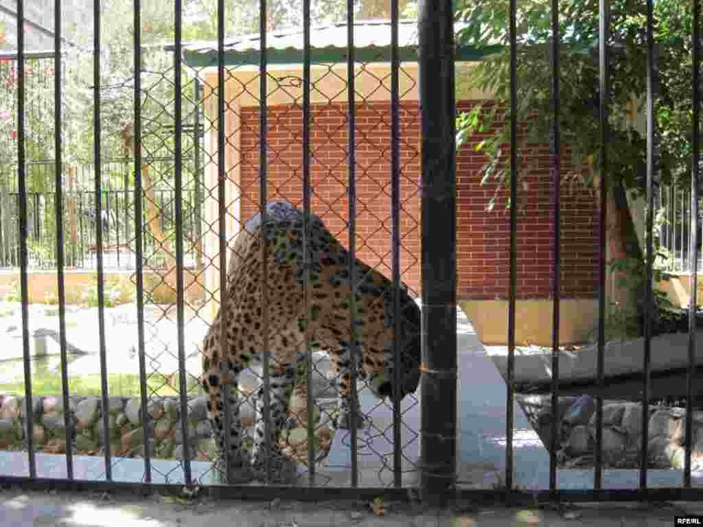"""Zoopark """"əhli"""" və yay istiləri #2"""