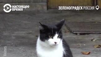 Котошеф Светлана за счет бюджета кормит бездомных котов в Зеленоградске
