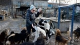 Tamara Tarnavska feeds rescued strays at the SOS International Animal Protection Society site in Kyiv in December 2018.
