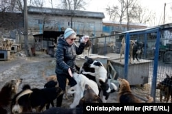 Tamara Tarnavska feeds rescued strays at the SOS International Animal Protection Society site in Kyiv.
